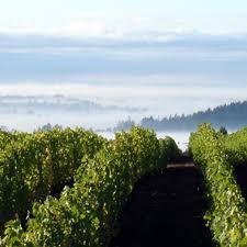 Red Thread™ | Penner-Ash Wine Cellars | Willamette Valley