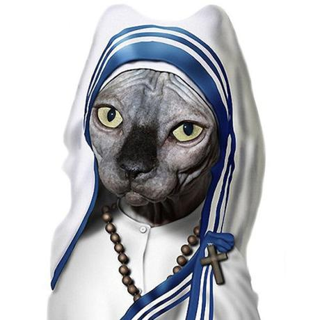 Cat Made To Look Like Mother TeresaCat Made To Look Like Mother Teresa