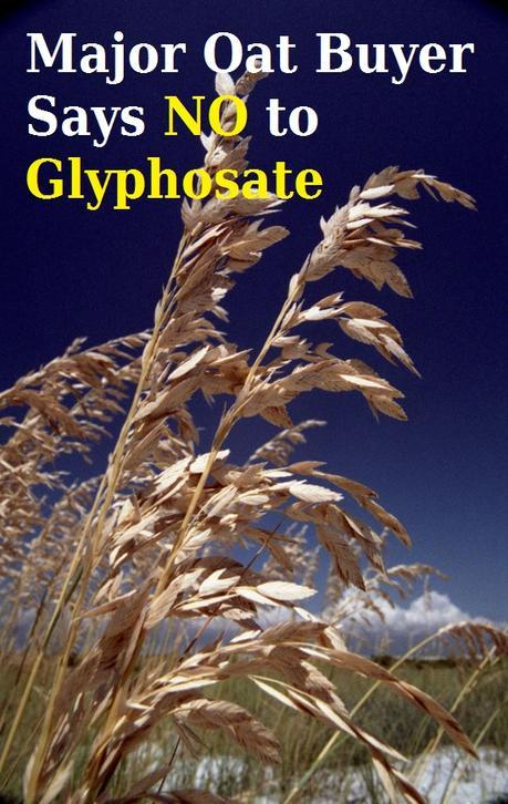 Major Oat Buyer Says No to Glyphosate: No More Shipments of Crops Sprayed Pre-harvest with Deadly Herbicide