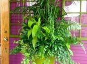 Jumbo Planter Design Ideas