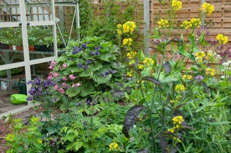 Mustard leaf +self seeders