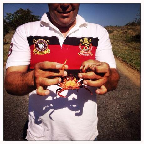 Our slightly insane taxi driver posing with one of the thousands of red crabs crawling across the freeway to Trinidad