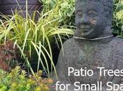 Patio Trees Small Gardens