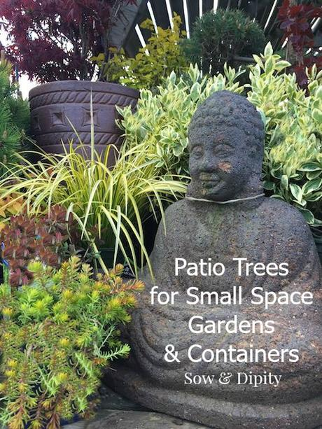Patio Trees for Small Gardens