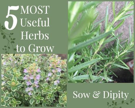 5 Most Useful Herbs in the Garden