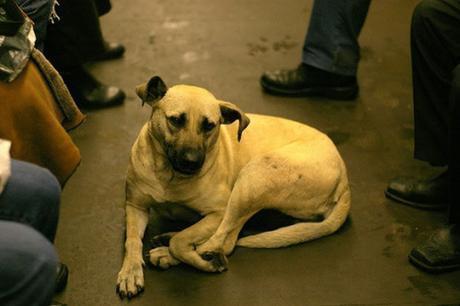 subway dogs9