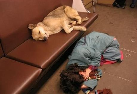 subway dogs3