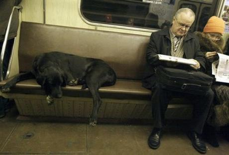 A dog travels in comfort on a seat, seemingly ownerless, aboard a subway train in Moscow, Wednesday, Nov., 18, 2009.  Stray dogs in Moscow  are often seen using public transportation, and is largely tolerated  by Moscow commuters. (AP Photo/Anna Shevelyova)