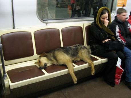 subway dogs2