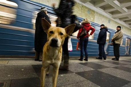 subway dogs5