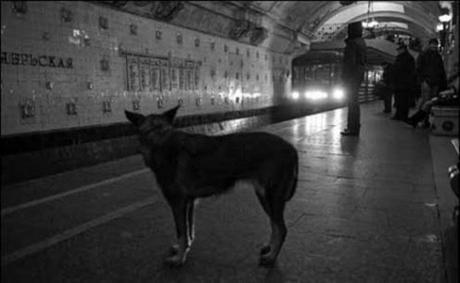 subway dogs11