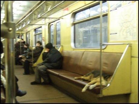 subway dogs7