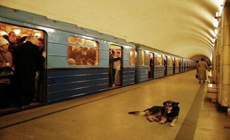 subway dogs4