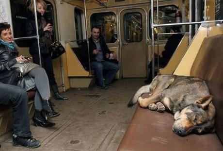 subway dogs1