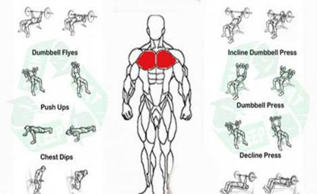 Good Chest Workout With Dumbbells Teaches You How To Correctly Execute The Dumbbell Pul