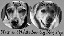 Black & White Sunday: Tag Team