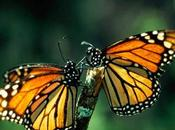 Chaos Theory Monarch Butterfly White Ones Nepal Tragic Romanian Selfie