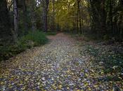 Creswick Forest, Victoria.