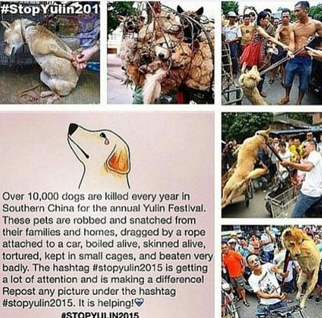 #StopYuLin2015  Save Innocent Animals