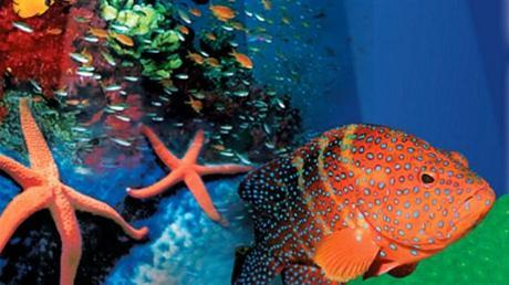Showing the beauty of the Northern Territory marine environment. Image from Travel NT's website.