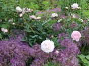 Sissinghurst Romantic Confection