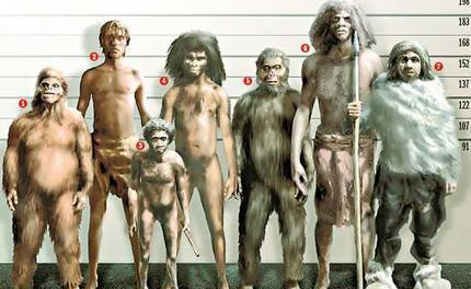Our ancestors were small: A review of hominin body size