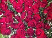 Love Long-stemmed Roses