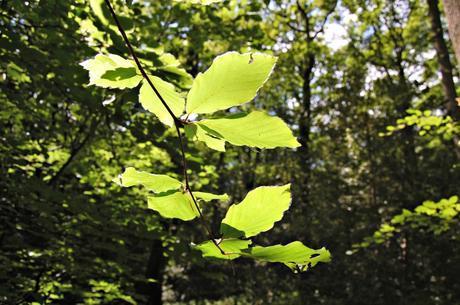 Merrell - leaf