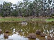 Refuse Ramble Hunts Dam, Hepburn Springs