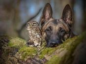 Owlet Best Friends