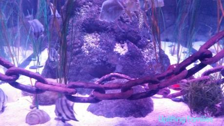 sea life aquarium review