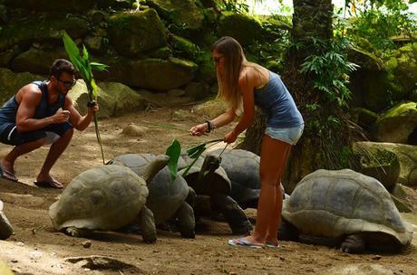 tortoises and tourists