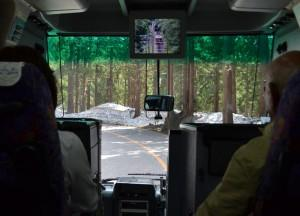 Bus in Pine Forests, Alpine Route by JR Pass Japan Rail
