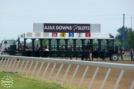 Ajax Downs Starting Gate
