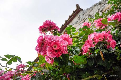 Photoblog: Day Trip To Herm