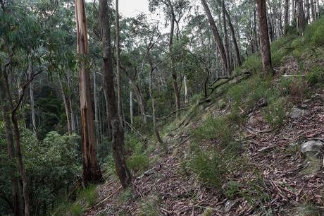 steep hillside wombat state forest