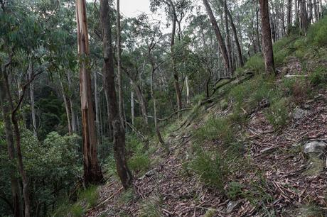 steep hillside wombat state forest