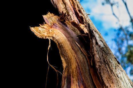 burnt tree detail
