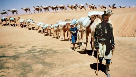 Silk Road travel camels