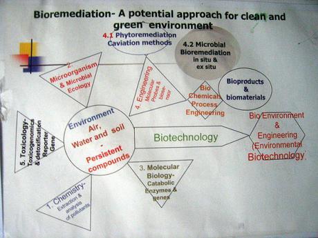 Bioremediation - PowerPoint PPT Presentation