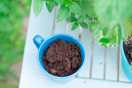 How To Use Coffee Grounds In Your Garden Paperblog