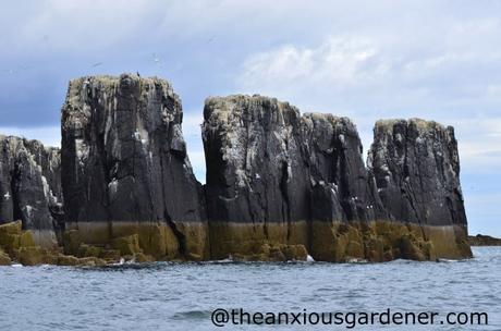 Farne Islands (2)