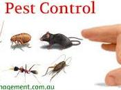 Free Your House from Termites?