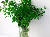 Store Fresh Parsley Cilantro