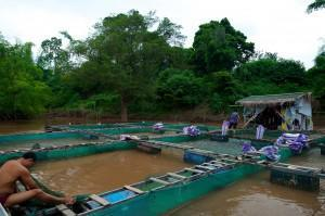 Aquaculture: How Sustainable is Farming Fish?