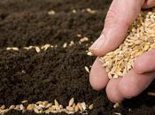 Here's VERY Seed…