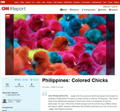 Philippines: Colored Chicks
