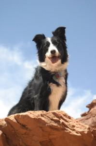 The Adventures of Molly the Super Collie
