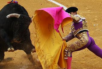 Pros of bullfighting, rodeo or animals in the circus?