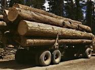 Billboard Tarps Can Be Used As Lumber Tarps